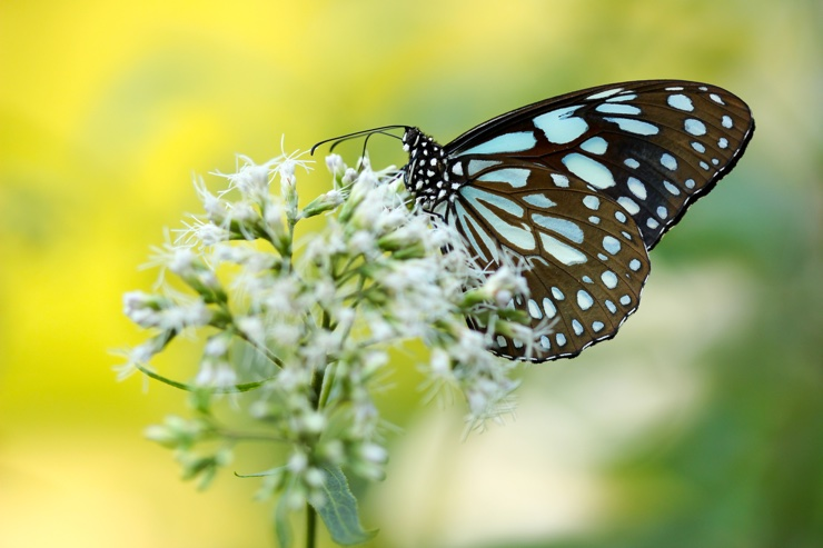 Beautiful stock image of a butterfly on a flower