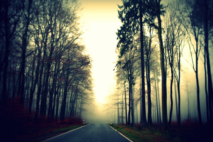 Atmospheric photo of a darkening road lined with trees