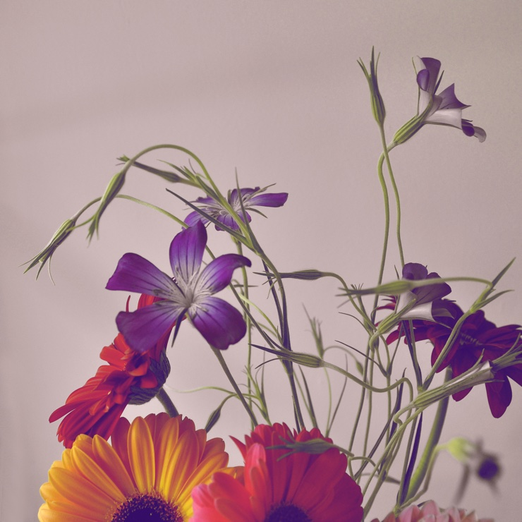 Stock image of cultivated flowers