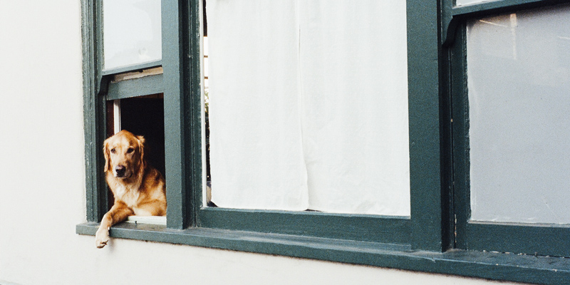 Image from pexels.com of a cute dog hanging out of the window