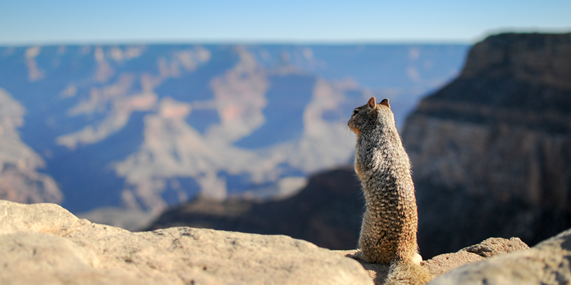 Squirrel Looking At Landscape Of Mountains