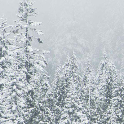 Full Screen Wallpaper of a christmas trees and snow