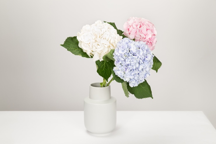 Beautiful photo of flowers to use on your ecommerce store